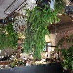 韓国ソウルの癒しの植物カフェ、ボタニーク